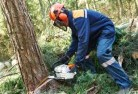 Alcomie Tree cutting services 21
