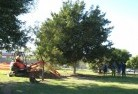 Alcomie Tree lopping 15